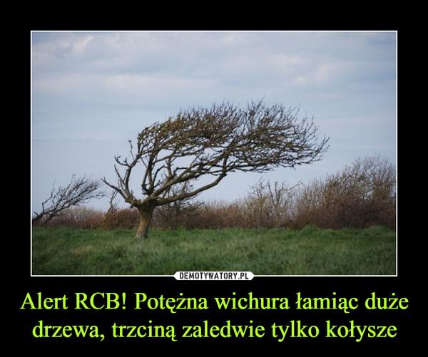 Alert RCB! Potężna wichura łamiąc duże drzewa, trzciną zaledwie tylko kołysze –