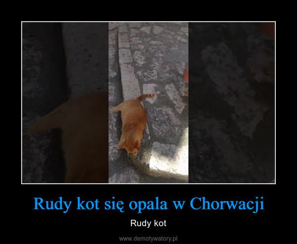 Rudy kot się opala w Chorwacji – Rudy kot