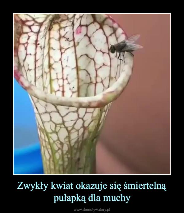 Zwykły kwiat okazuje się śmiertelną pułapką dla muchy –
