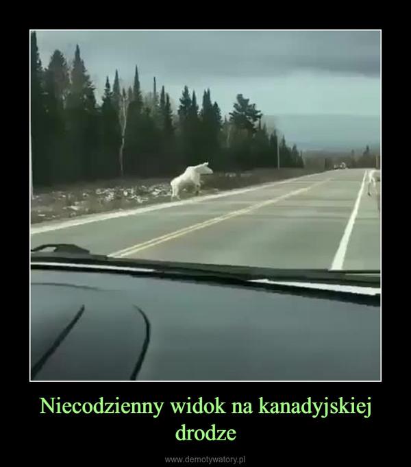 Niecodzienny widok na kanadyjskiej drodze –