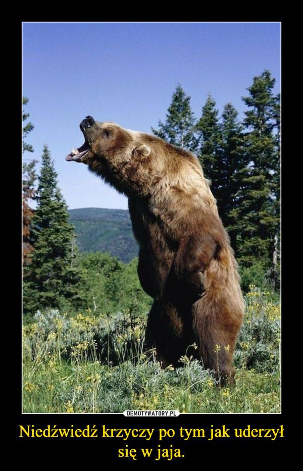 Niedźwiedź krzyczy po tym jak uderzył się w jaja. –