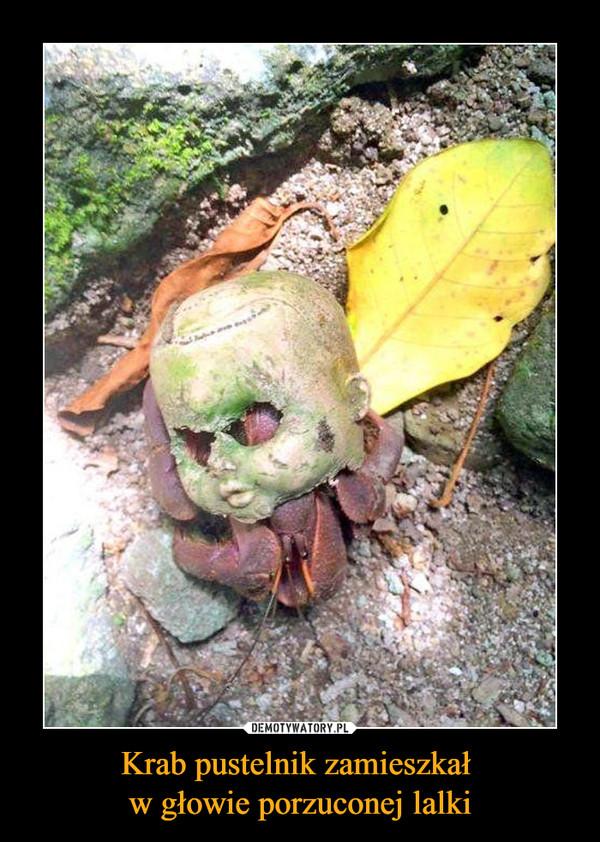 Krab pustelnik zamieszkał w głowie porzuconej lalki –