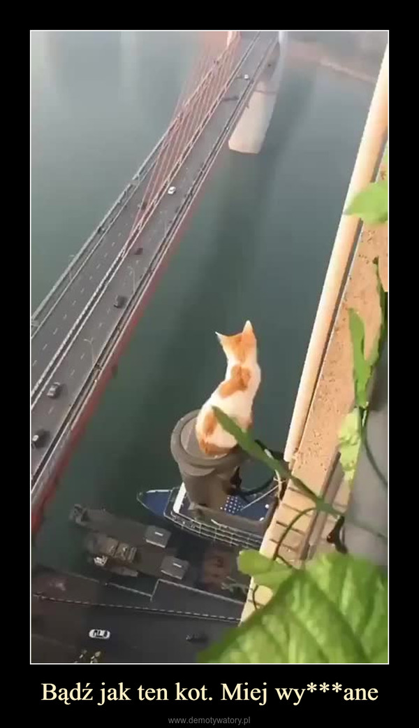 Bądź jak ten kot. Miej wy***ane –