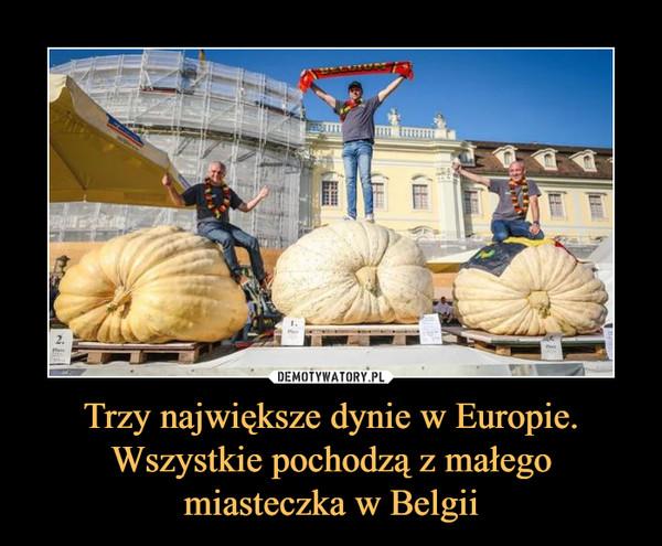 Trzy największe dynie w Europie. Wszystkie pochodzą z małego miasteczka w Belgii –