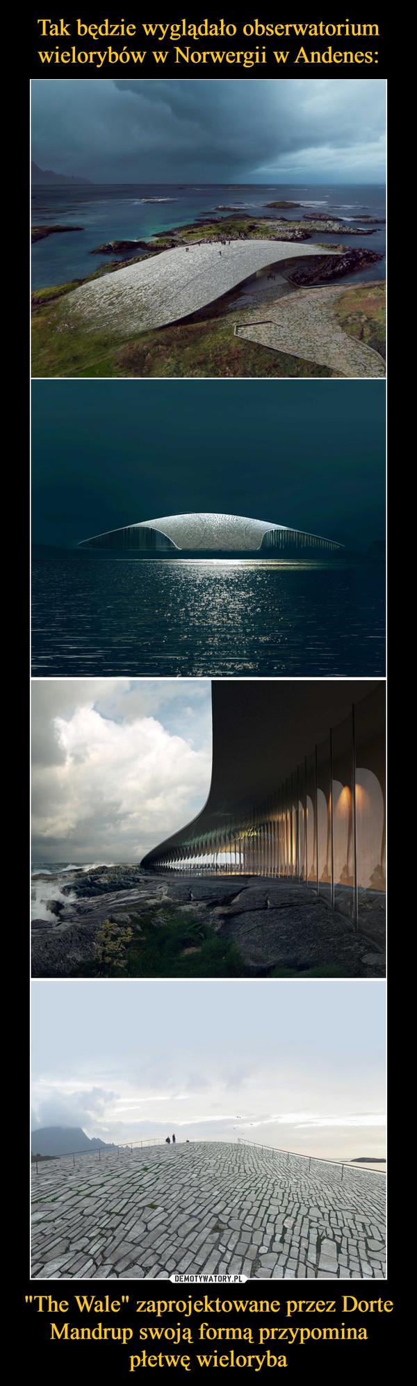 """""""The Wale"""" zaprojektowane przez Dorte Mandrup swoją formą przypomina płetwę wieloryba –"""