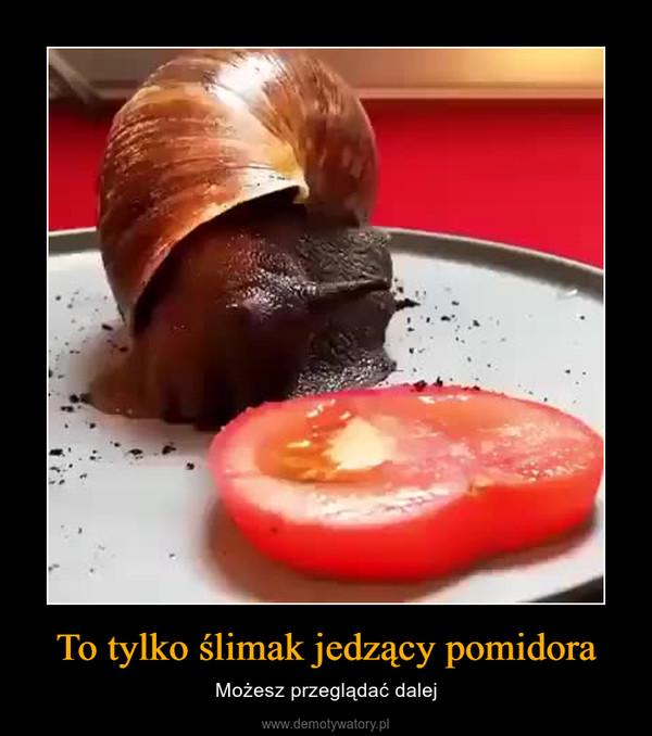To tylko ślimak jedzący pomidora – Możesz przeglądać dalej