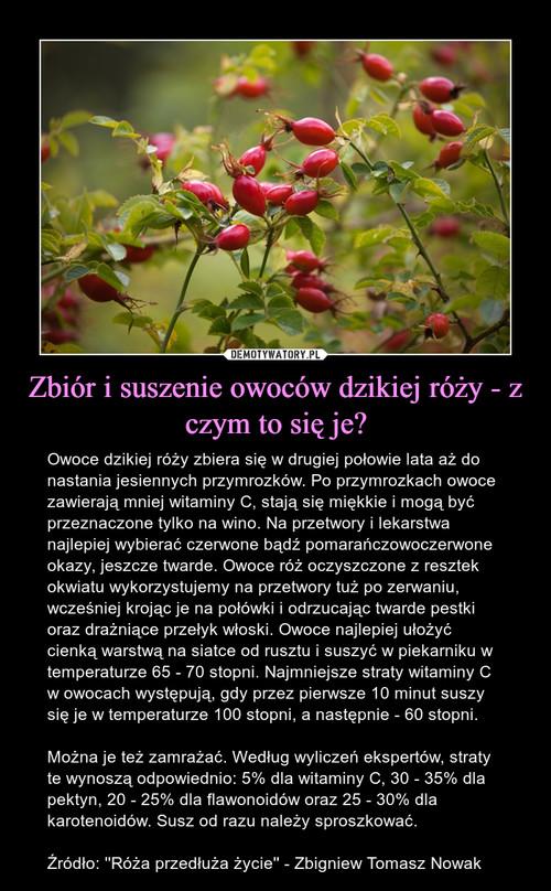 Zbiór i suszenie owoców dzikiej róży - z czym to się je?
