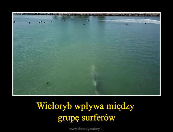 Wieloryb wpływa między grupę surferów –