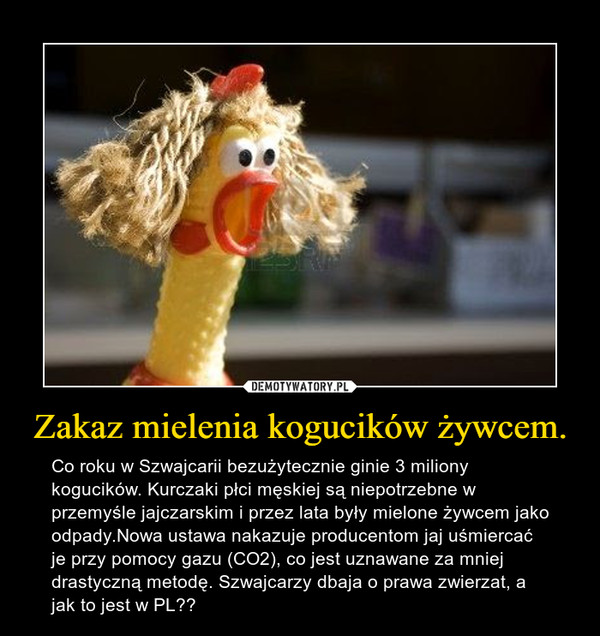 Zakaz mielenia kogucików żywcem. – Co roku w Szwajcarii bezużytecznie ginie 3 miliony kogucików. Kurczaki płci męskiej są niepotrzebne w przemyśle jajczarskim i przez lata były mielone żywcem jako odpady.Nowa ustawa nakazuje producentom jaj uśmiercać je przy pomocy gazu (CO2), co jest uznawane za mniej drastyczną metodę. Szwajcarzy dbaja o prawa zwierzat, a jak to jest w PL??