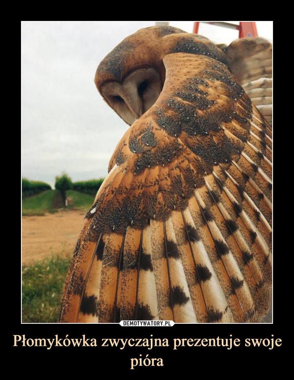 Płomykówka zwyczajna prezentuje swoje pióra –