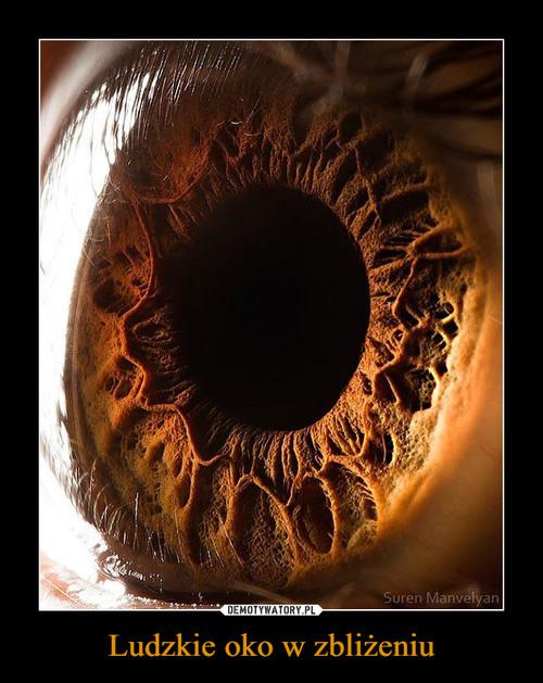 Ludzkie oko w zbliżeniu