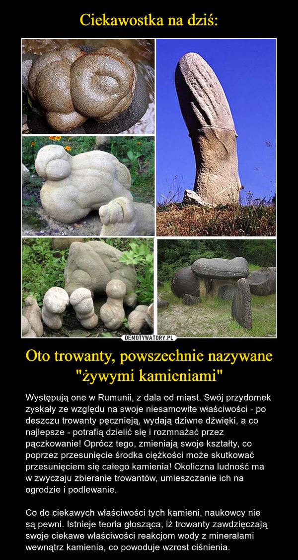 """Oto trowanty, powszechnie nazywane """"żywymi kamieniami"""" – Występują one w Rumunii, z dala od miast. Swój przydomek zyskały ze względu na swoje niesamowite właściwości - po deszczu trowanty pęcznieją, wydają dziwne dźwięki, a co najlepsze - potrafią dzielić się i rozmnażać przez pączkowanie! Oprócz tego, zmieniają swoje kształty, co poprzez przesunięcie środka ciężkości może skutkować przesunięciem się całego kamienia! Okoliczna ludność ma w zwyczaju zbieranie trowantów, umieszczanie ich na ogrodzie i podlewanie. Co do ciekawych właściwości tych kamieni, naukowcy nie są pewni. Istnieje teoria głosząca, iż trowanty zawdzięczają swoje ciekawe właściwości reakcjom wody z minerałami wewnątrz kamienia, co powoduje wzrost ciśnienia."""