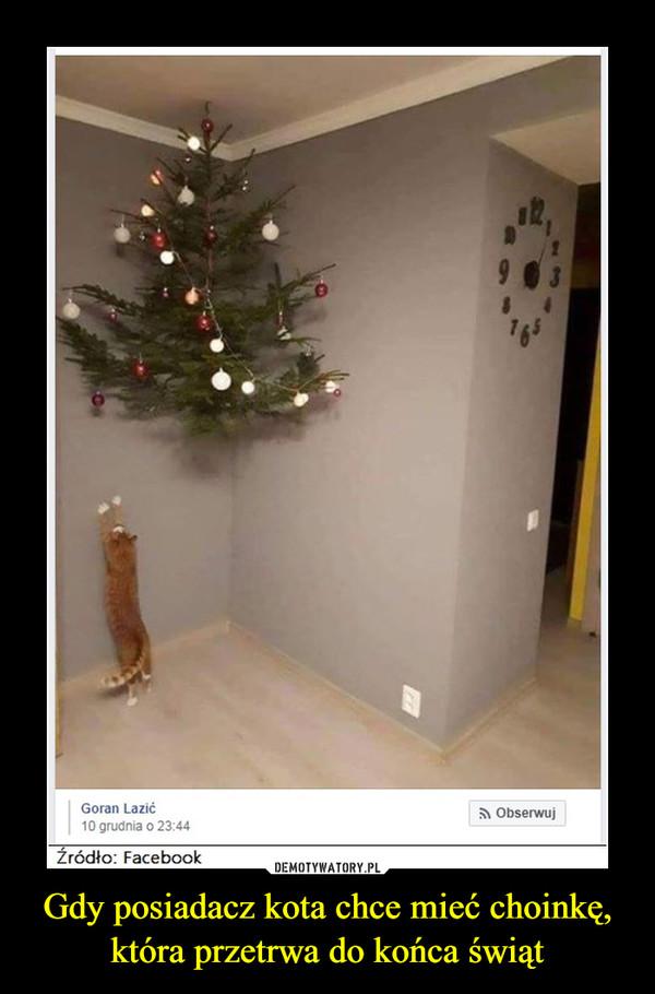 Gdy posiadacz kota chce mieć choinkę, która przetrwa do końca świąt –
