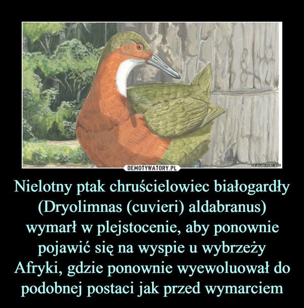Nielotny ptak chruścielowiec białogardły (Dryolimnas (cuvieri) aldabranus) wymarł w plejstocenie, aby ponownie pojawić się na wyspie u wybrzeży Afryki, gdzie ponownie wyewoluował do podobnej postaci jak przed wymarciem –