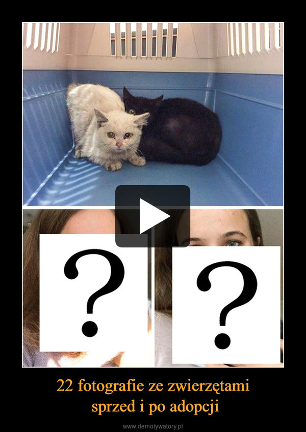 22 fotografie ze zwierzętami sprzed i po adopcji –