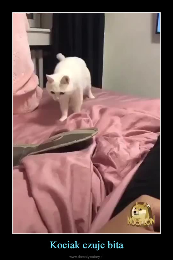 Kociak czuje bita –