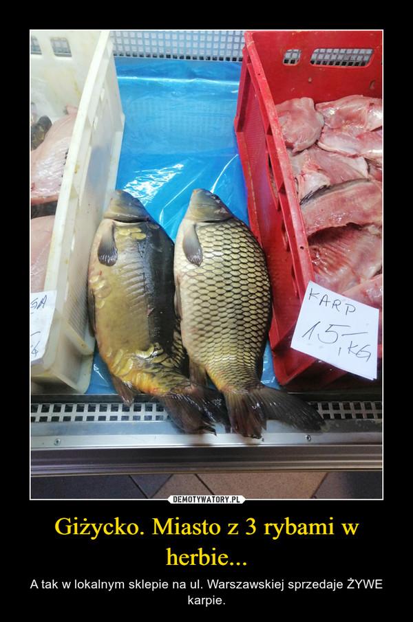 Giżycko. Miasto z 3 rybami w herbie... – A tak w lokalnym sklepie na ul. Warszawskiej sprzedaje ŻYWE karpie.