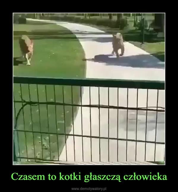 Czasem to kotki głaszczą człowieka –
