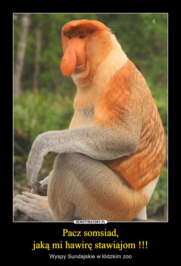 Pacz somsiad,jaką mi hawirę stawiajom !!! – Wyspy Sundajskie w łódzkim zoo