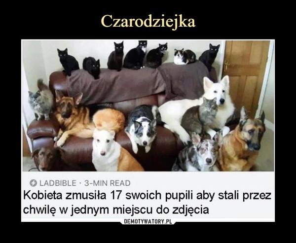 –  LADBIBLE 3-MIN READKobieta zmusiła 17 swoich pupili aby stali przezchwilę w jednym miejscu do zdjęcia