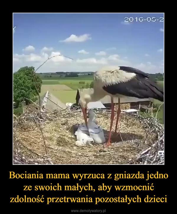Bociania mama wyrzuca z gniazda jedno ze swoich małych, aby wzmocnić zdolność przetrwania pozostałych dzieci –