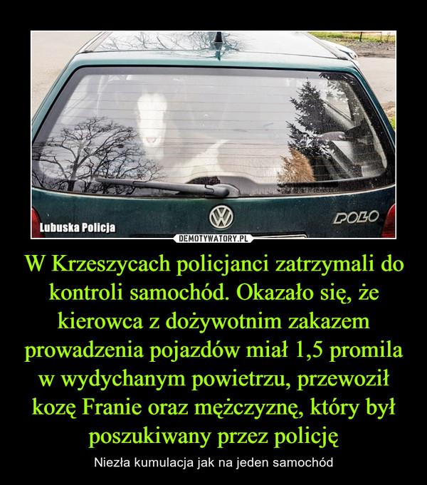 W Krzeszycach policjanci zatrzymali do kontroli samochód. Okazało się, że kierowca z dożywotnim zakazem prowadzenia pojazdów miał 1,5 promila w wydychanym powietrzu, przewoził kozę Franie oraz mężczyznę, który był poszukiwany przez policję – Niezła kumulacja jak na jeden samochód