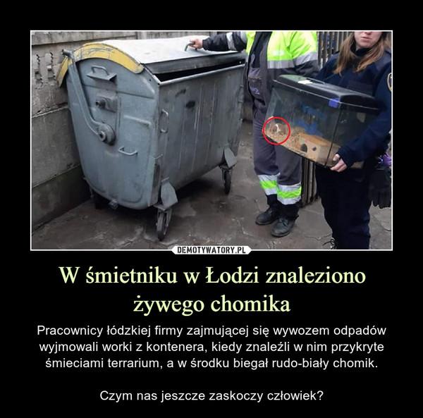 W śmietniku w Łodzi znalezionożywego chomika – Pracownicy łódzkiej firmy zajmującej się wywozem odpadów wyjmowali worki z kontenera, kiedy znaleźli w nim przykryte śmieciami terrarium, a w środku biegał rudo-biały chomik.Czym nas jeszcze zaskoczy człowiek?