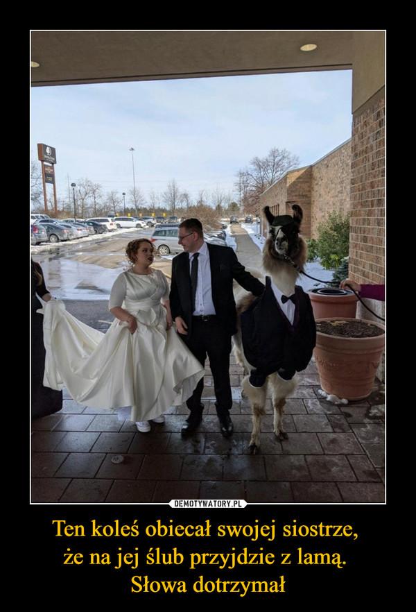 Ten koleś obiecał swojej siostrze, że na jej ślub przyjdzie z lamą. Słowa dotrzymał –