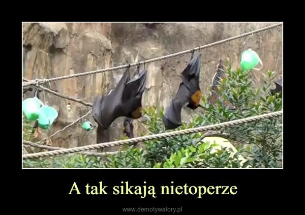 A tak sikają nietoperze –