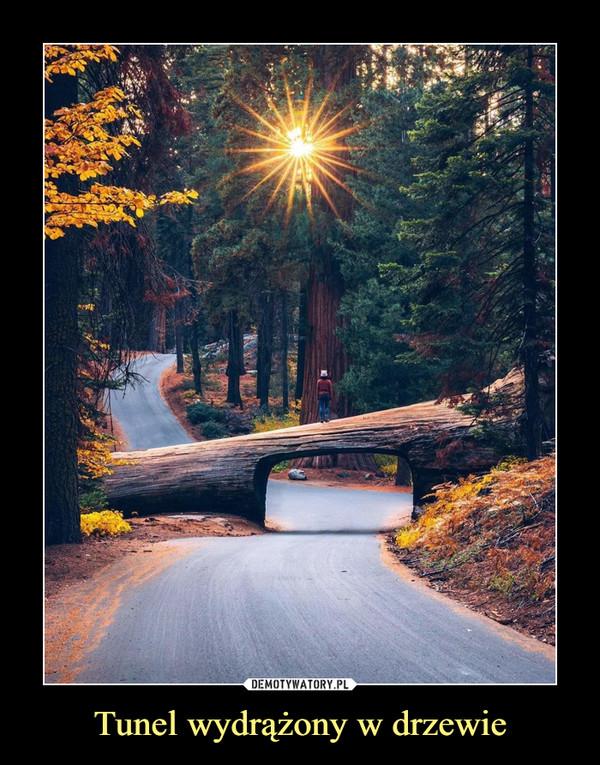 Tunel wydrążony w drzewie –