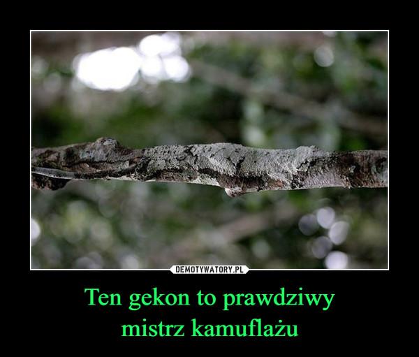 Ten gekon to prawdziwymistrz kamuflażu –