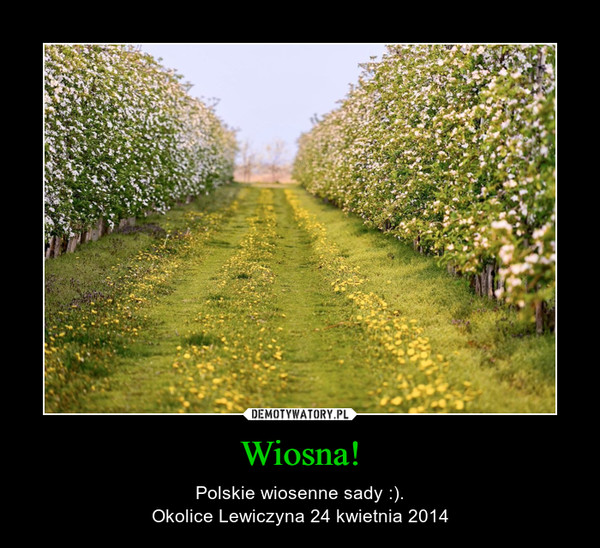 Wiosna! – Polskie wiosenne sady :).Okolice Lewiczyna 24 kwietnia 2014