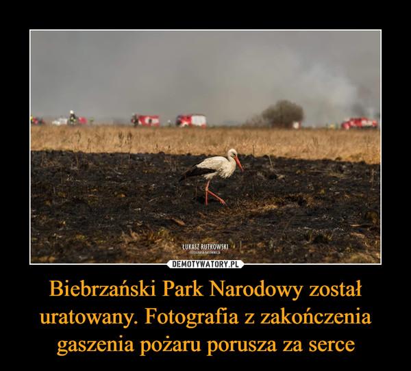 Biebrzański Park Narodowy został uratowany. Fotografia z zakończenia gaszenia pożaru porusza za serce –