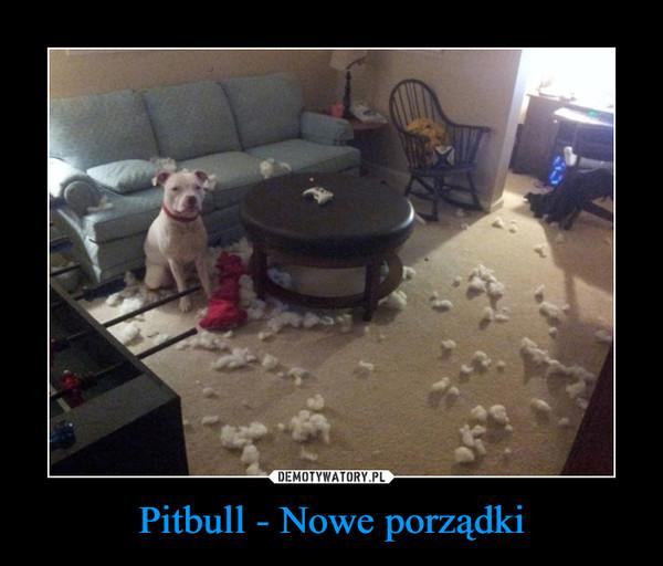 Pitbull - Nowe porządki –