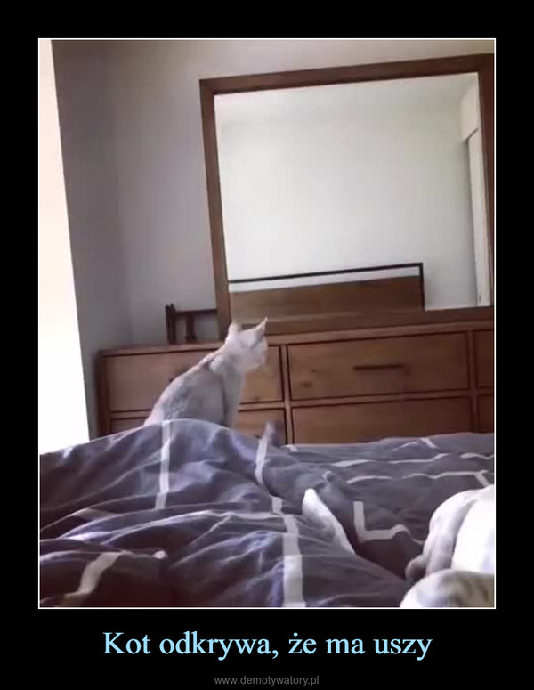 Kot odkrywa, że ma uszy –