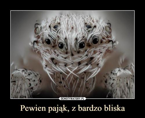 Pewien pająk, z bardzo bliska