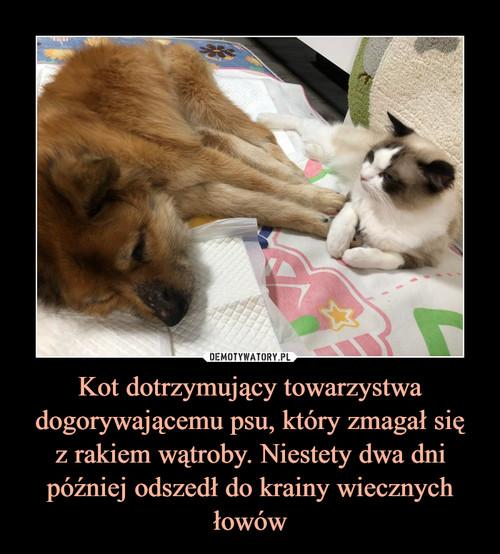 Kot dotrzymujący towarzystwa dogorywającemu psu, który zmagał się z rakiem wątroby. Niestety dwa dni później odszedł do krainy wiecznych łowów