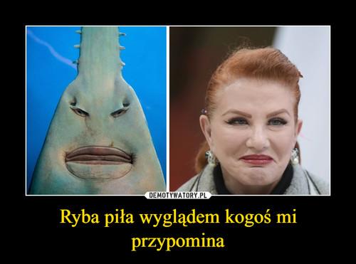 Ryba piła wyglądem kogoś mi przypomina