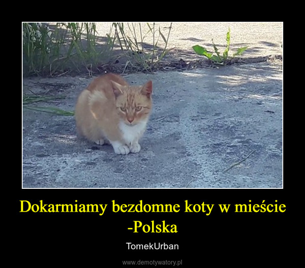 Dokarmiamy bezdomne koty w mieście -Polska – TomekUrban
