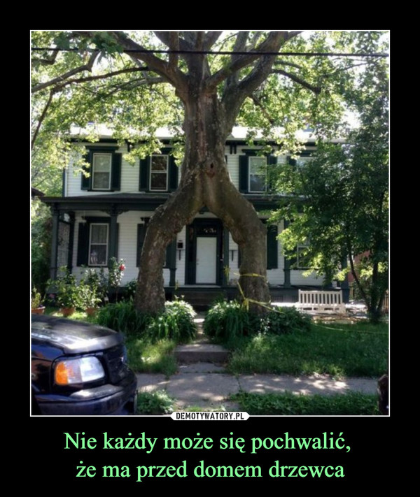 Nie każdy może się pochwalić, że ma przed domem drzewca –