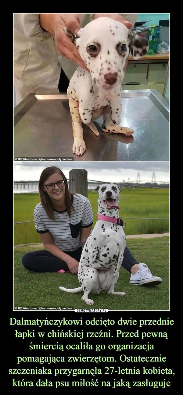 Dalmatyńczykowi odcięto dwie przednie łapki w chińskiej rzeźni. Przed pewną śmiercią ocaliła go organizacja pomagająca zwierzętom. Ostatecznie szczeniaka przygarnęła 27-letnia kobieta, która dała psu miłość na jaką zasługuje –