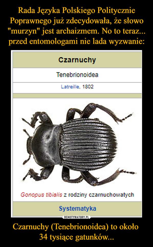 Czarnuchy (Tenebrionoidea) to około 34 tysiące gatunków... –