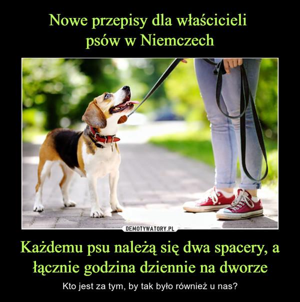 Każdemu psu należą się dwa spacery, a łącznie godzina dziennie na dworze – Kto jest za tym, by tak było również u nas?