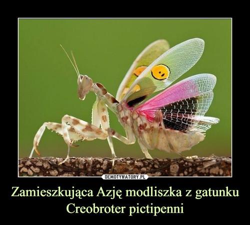 Zamieszkująca Azję modliszka z gatunku Creobroter pictipenni