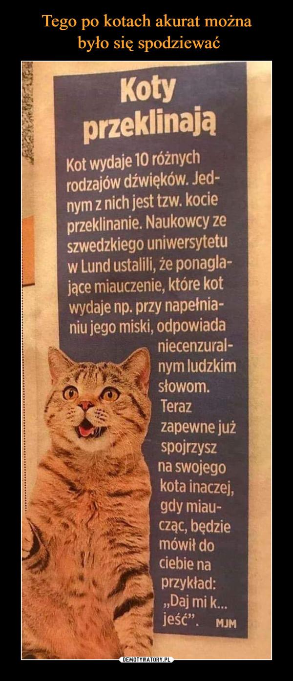 """–  KotyprzeklinająKot wydaje 10 różnychrodzajów dźwięków. Jed-nym z nich jest tzw.kocieprzeklinanie. Naukowcy zeszwedzkiego uniwersytetuw Lund ustalili, że ponagla-jące miauczenie, które kotwydaje np. przy napełnia-niu jego miski, odpowiadaniecenzural-nym ludzkimsłowom.Terazzapewne jużspojrzyszna swojegokota inaczej,gdy miau-cząc, będziemówił dociebie naprzykład:""""Daj mi k.jeść"""". MJM"""