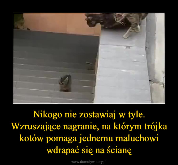 Nikogo nie zostawiaj w tyle. Wzruszające nagranie, na którym trójka kotów pomaga jednemu maluchowi wdrapać się na ścianę –