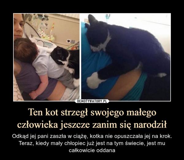 Ten kot strzegł swojego małego człowieka jeszcze zanim się narodził – Odkąd jej pani zaszła w ciążę, kotka nie opuszczała jej na krok. Teraz, kiedy mały chłopiec już jest na tym świecie, jest mu całkowicie oddana