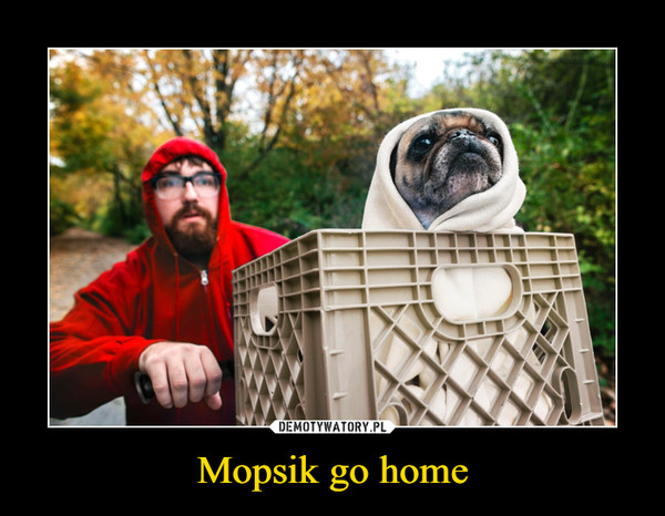 Mopsik go home –