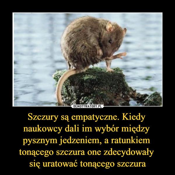 Szczury są empatyczne. Kiedy naukowcy dali im wybór między pysznym jedzeniem, a ratunkiem tonącego szczura one zdecydowały się uratować tonącego szczura –