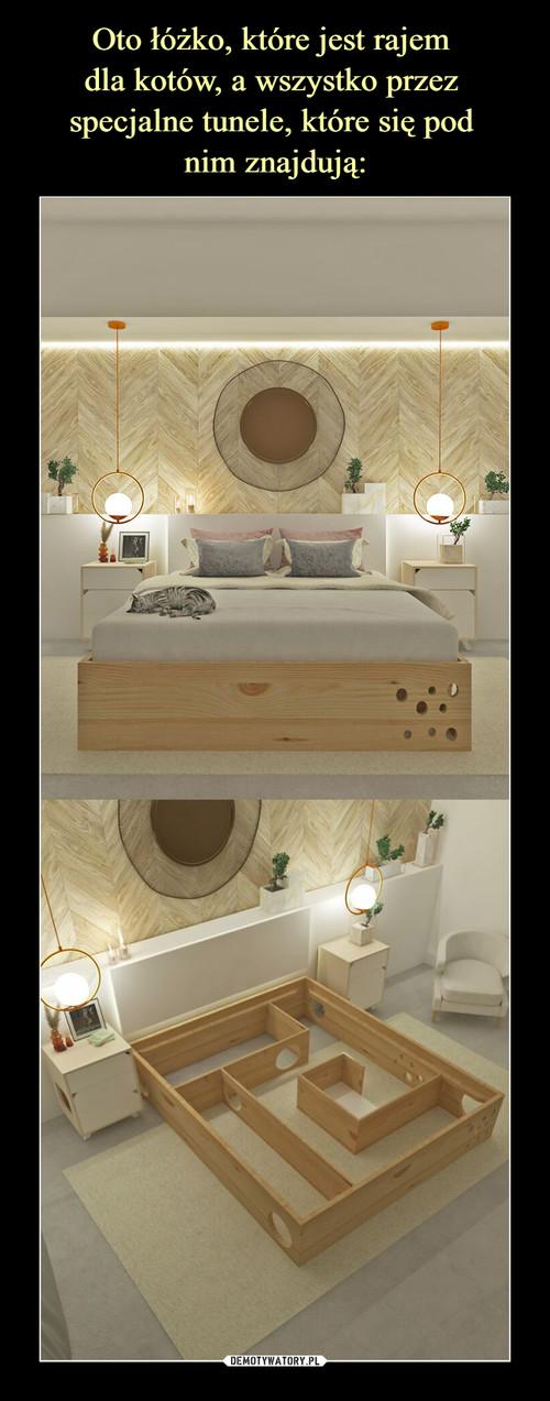 Oto łóżko, które jest rajem  dla kotów, a wszystko przez  specjalne tunele, które się pod  nim znajdują: